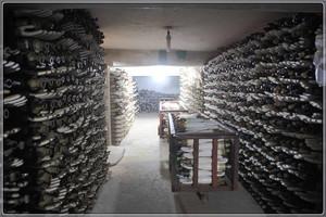Moulds storeroom