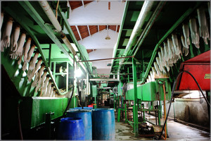 Production lines 1